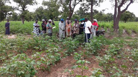 Mali : une récolte de coton record, mais sans industrie textile, le pays n'en transforme que 2%