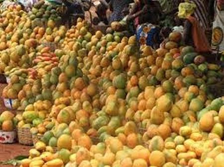 Projet Cadre Intégré Renforcé : Plus de 22 276 tonnes de mangues exportées en 2018