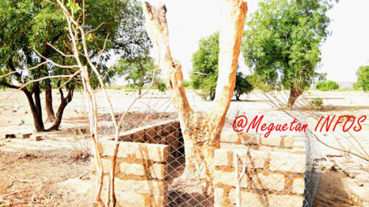 KOULIKORO : Un arbre se redresse  tout seul  après  avoir passé 5 ans  couché au sol