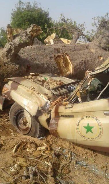 ZIHARA DU GUIDE ANCARDINE A TAMANI : Un baobab tombe de lui